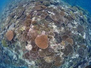 池間島 シュノーケリング サンゴ